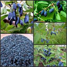 Egrow 200Pcs/Pack Lonicera Caerulea Fruit Seeds Home Garden Plants Honeyberry Bl image 1