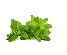 400 Seeds Stevia Herbs Green Herb, DIY Herb Seeds DL418C DG - $8.99