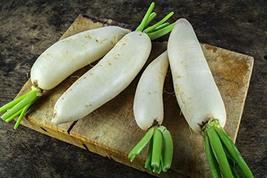 Sow No GMO Radish China White Winter Non GMO Heirloom Vegetable Seeds 800 Seeds - $9.90