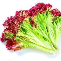 100 Lettuce Seeds Red Leaf Lactuca Sativa Organic Vegetables C008 - $1.99