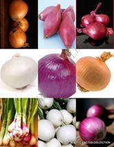 ONION MIX vegetable mixed rare herb plant heirloom ORGANIC garden seed 150 SEEDS - $18.00