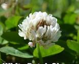 S l1600  1  thumb155 crop