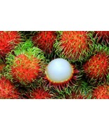 Fresh Rambutan-2 Lbs - $49.99