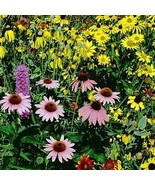 Wildflower Midwest Mix (7g+Seeds) - $21.98