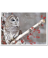 Winter Owl Christmas Cards - $60.50+
