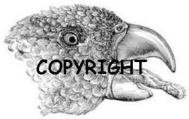 PARROT FACE NEW mounted rubber stamp by ASM - $5.00