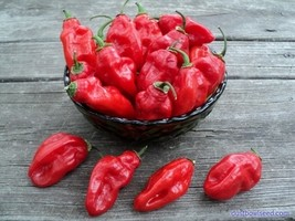 Habanero red pepper seeds 100 seeds non gmo1 thumb200