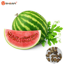 Chinese Watermelon Seeds Delicious Fruit Water Melon Seeds - 10 Seeds/pack - $4.19