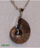 NM-847 - Whole Ammonite Fossil Mounted to Sterl... - $24.75