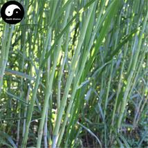 Buy Pennisetum Purpureum Seeds 250pcs Plant Forage Grass Sweet Pennisetum - $5.99
