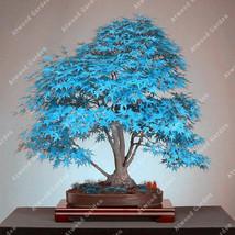 20 Pcs Blue Fire Maple Tree Seeds Bonsai - $3.99