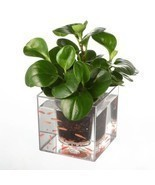 Self Watering Flower Pot Fish Tank Planter - $25.35 CAD