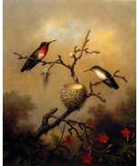 RUBY THROATED HUMMINGBIRD BY HEADE NORTH AMERICA BIRD NEST FINE ART LARGE POS... - $16.51