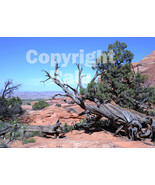 Twisted Tree Red Rocks National Park Nature 5x7 Original Landscape Photo - $9.99