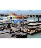 Pier 39 Seals San Francisco Harbor California 5x7 Original Photo - $9.99