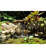 Mini Japanese Garden Bridge Lotus Botanical Place 5x7 Original Photo - $9.99