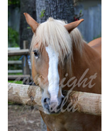 Brown and White Horse Animal Photography 5x7 Original Close-up Photo - $9.99