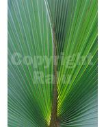 Palm Leaf Close-up Macro Photography Nature 5x7 Original Photo - $9.99