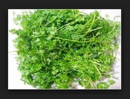SHIP FROM US 100 Seeds Chervil, Curled Gourmet's Parsley,DIY Herb Seeds SR - $14.99
