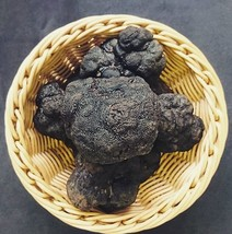 Wild Tuber melanosporum Black Truffle FRESH Mushrooms 1 kg (35.27oz)  - $2,670.00
