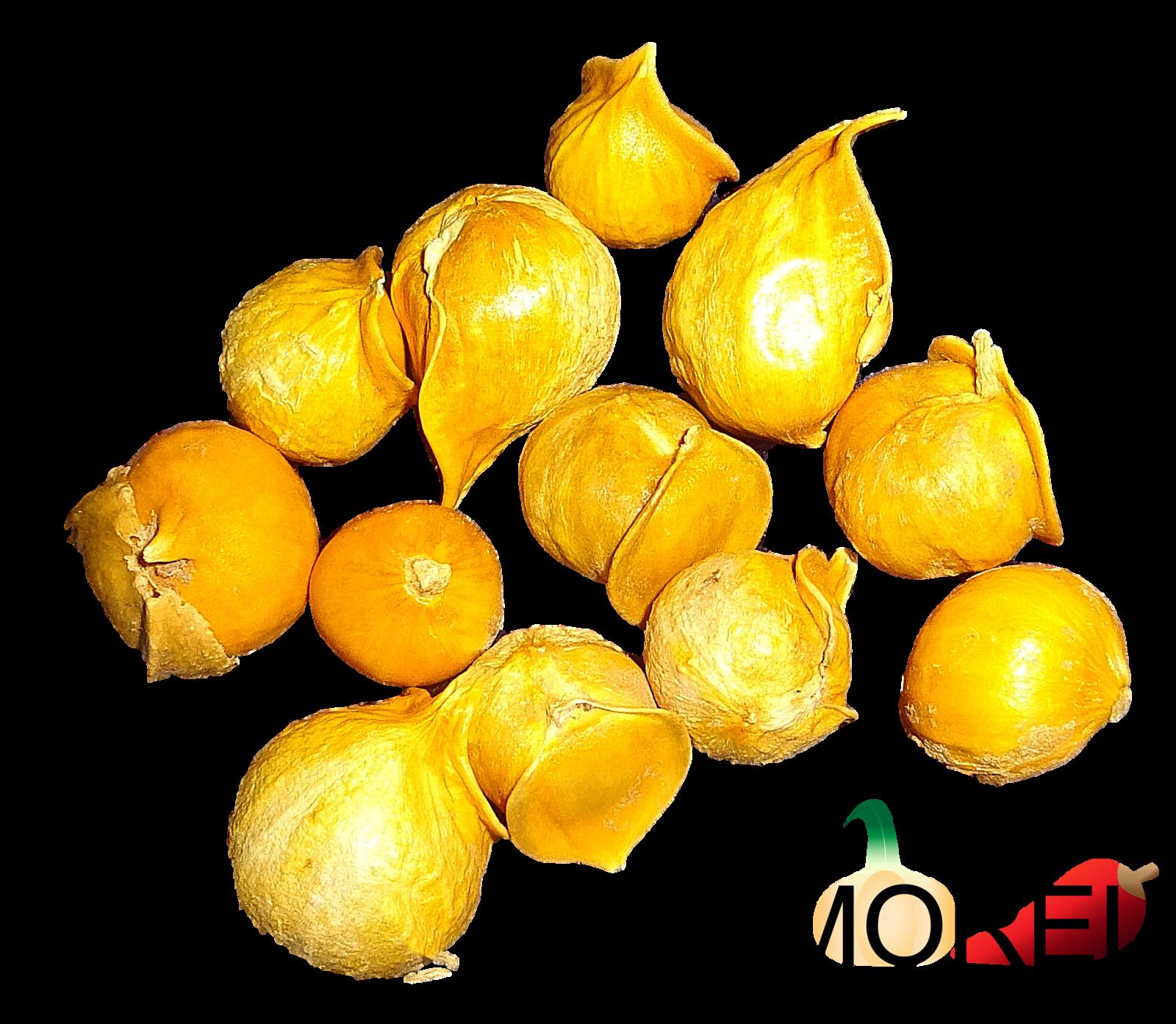 Japanese Garlic (Ajo Japones) Count per bag= 30-60-130