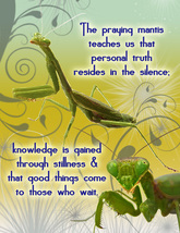 PRAYING MANTIS: Unique Blank Insect Philosophy Card - $5.00