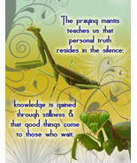 PRAYING MANTIS: Unique Blank Insect Philosophy Card - $4.25