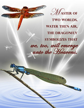DRAGONFLY: Unique Blank Insect Philosophy Card - $4.25