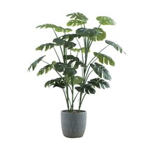 "Colossal 46"" Floor Monstera Plant - $149.99"