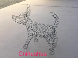 Chihuahua - $65.00
