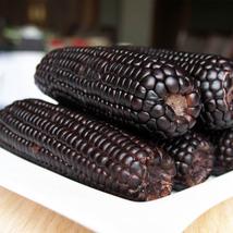 Sweet Corn Seeds Black Waxy Corn Seeds Organic Vegetables Seeds - 12 see... - $4.89