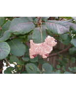 Cairn Terrier everyday Ornament, clearance 50% off - get it before it is... - $7.50
