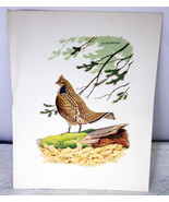 11 X 14 Richard Eckelberry Bird Art Print (Reproduction), Ruffed Grouse - $3.95