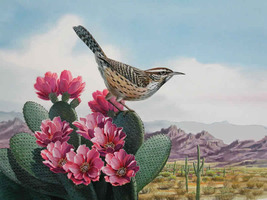 Bird Cactus Wren Cross Stitch Pattern***L@@K*** - $4.95