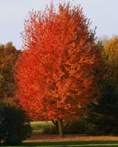 Autumn Blaze Maple quart pot - $12.95