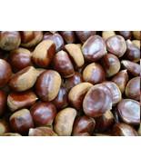 Fresh Raw Chestnut 1 LB - $25.99