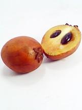 Sapodilla Manilkara zapota Sapotaceae 10 Seeds - $5.00
