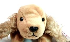 Ty Beanie Babies Spunky the Cocker Spaniel Dog  Retired - $5.35