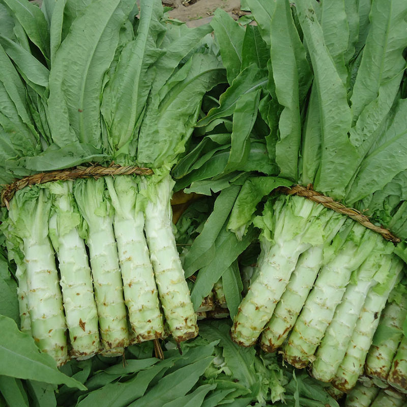 Asparagus Lettuce Seed Mature Flowering 80 Days Vegetable ...