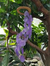 Wooden Ring Purple Capiz Shells Wind Chime Spiral - Garden Decor / Beach... - $15.00