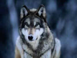 amazing elder male werewolf spirit full moon Psychic magic power love money - $48.99