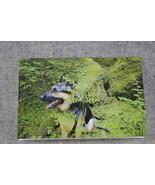 Photo Notecards German Shepherd hiding behind the huckleberry bush 4x6 C... - $4.25