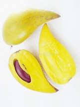 Thai Pouteria campechiana Sapotaceae 5 Seeds Th... - $6.00