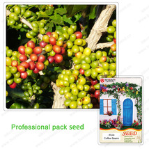 Arabica Coffee Beans Seeds - 30 Seeds/pack - $4.99