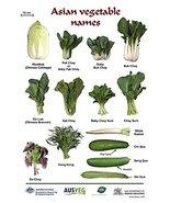 Vinteja charts of - Asian Vegetable Names - A3 Poster Print - $22.99