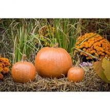 Outdoor Pumpkin Decor 3 Set Autumn Fall Decorations Thanksgiving Hallowe... - $94.99