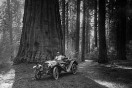 First Auto to Enter Sequoia National Park - Art Print - $19.99+