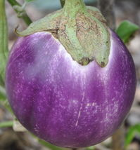 30 Rosa Bianca Italian Eggplant Seeds - $7.25