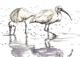 "Akimova: POND BIRDS, ink, black&white, lake, 7.5""x5.25"" - $10.00"