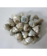 Vintage Early Miriam Haskell Blue Seashells Brooch Pin Faux Pearl Cluste... - $23.71
